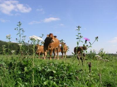 Biodiversiteit ook financieel aantrekkelijk