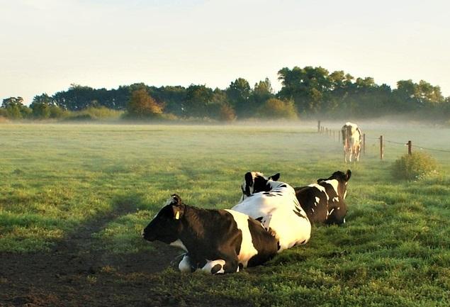 Jonge boeren zien kansen voor eiwit van Twents land
